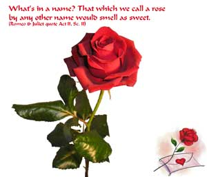 Single red rose perfect to send with love